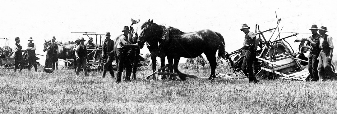 black and white photo of soldier settlers and horses