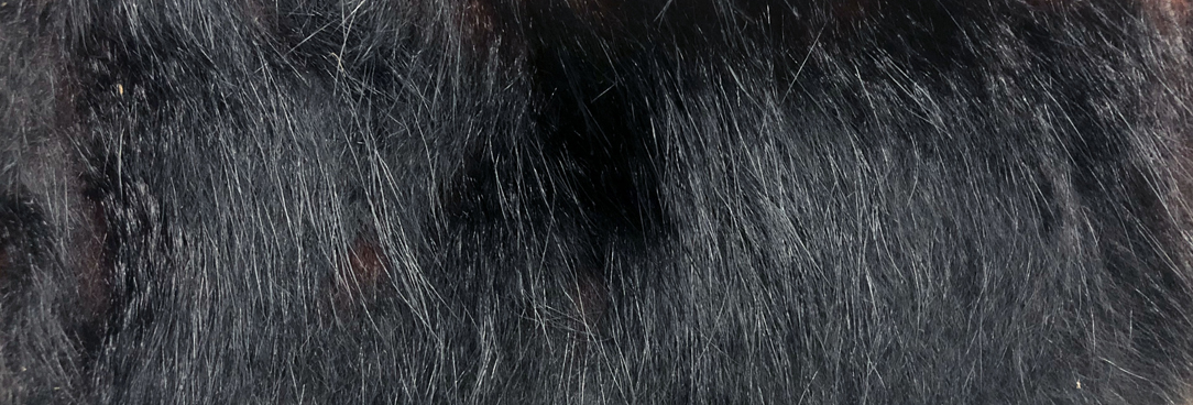 photo of fur hairs