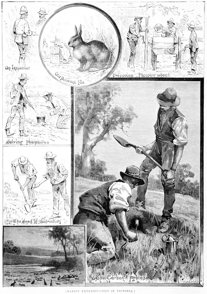 Old black and white sketch in newspaper Australia 1885