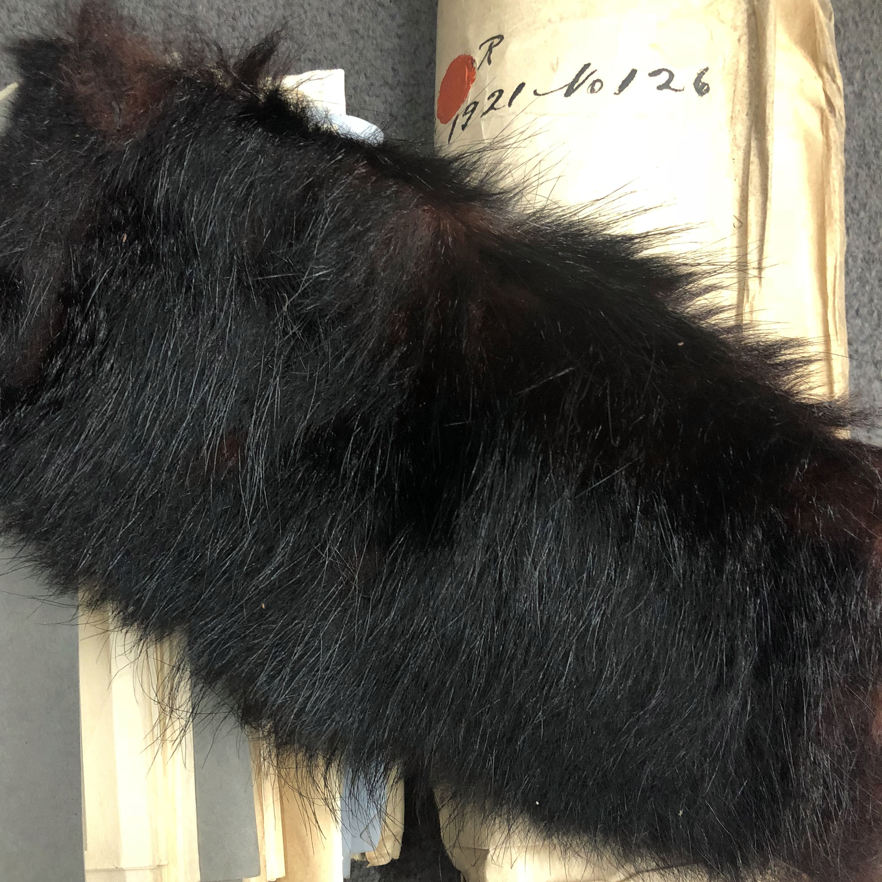 photo of the fur