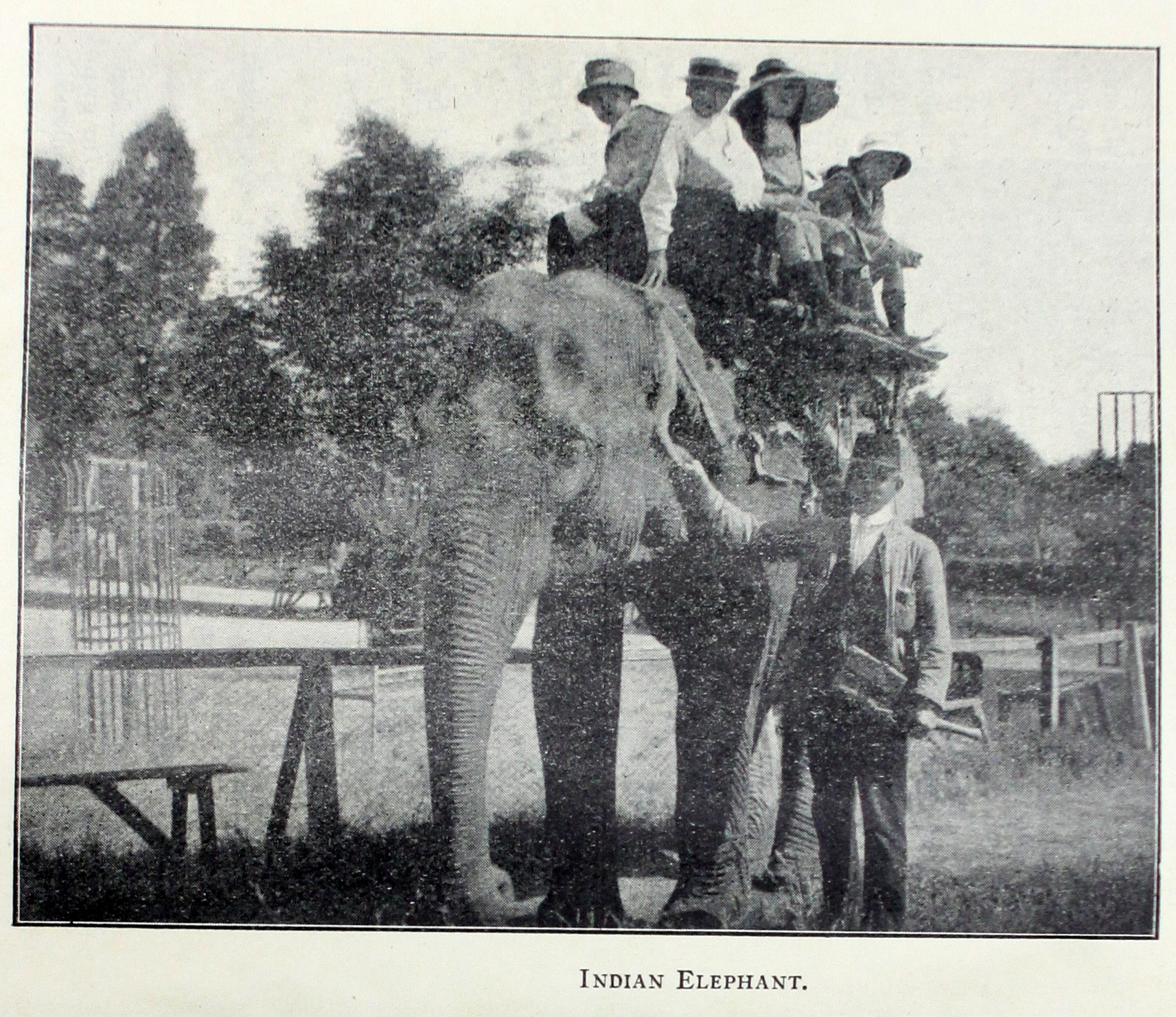 man standing next to an elephant