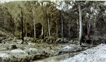 Photograph entitled, 'Maroondah Valley looking upstream before removal of timber 6.12.16