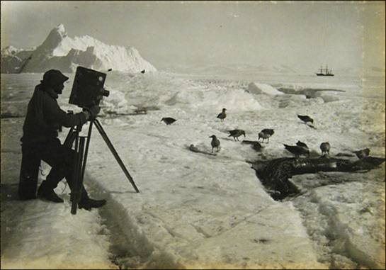 photo of man taking photos of penguins