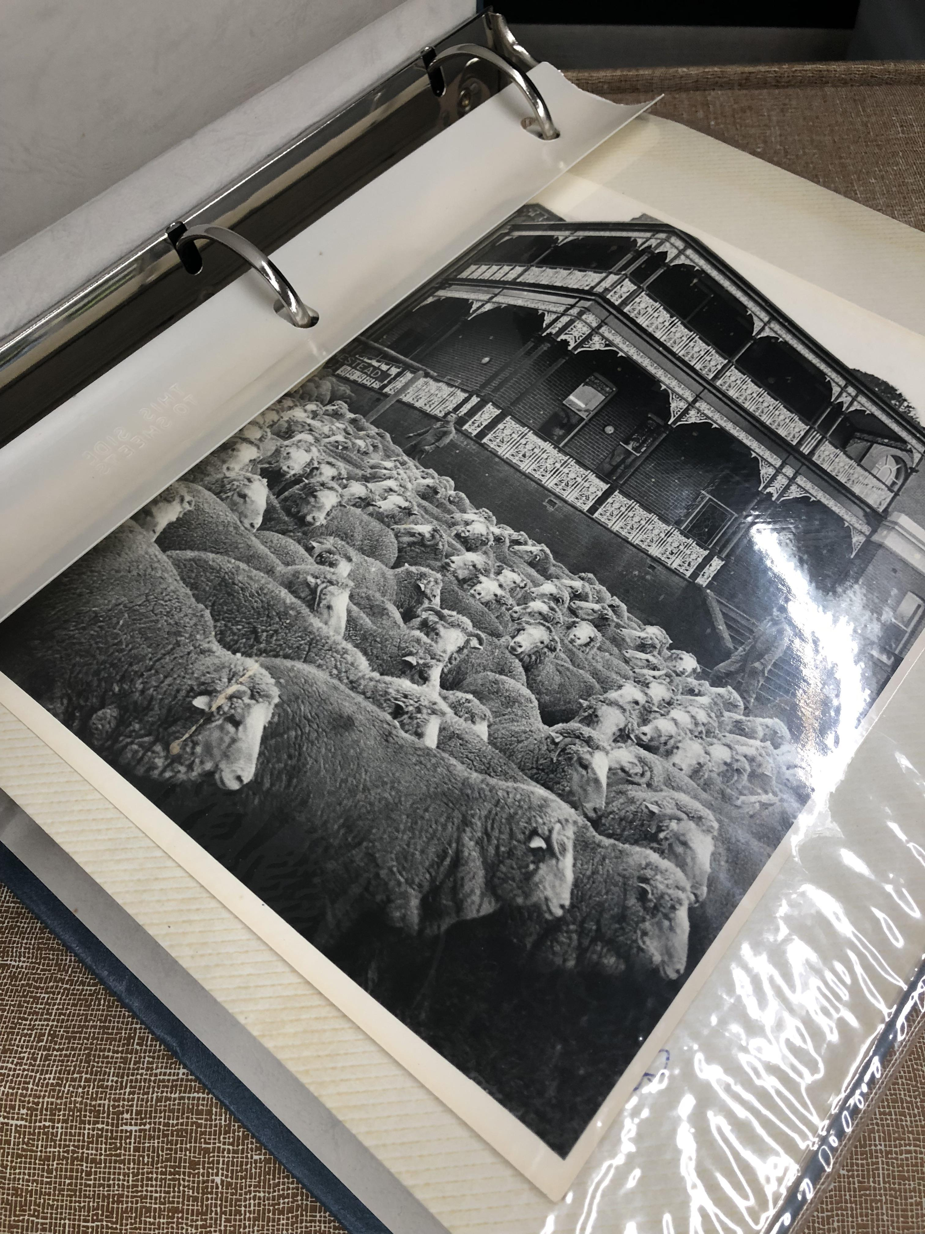 inside photo album showing photo of sheep outside a house