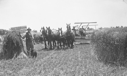 Photo of a farmer with horses in a field
