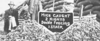 Men in front of piles of mice and sign promoting traps